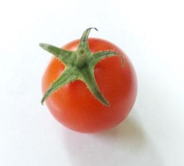 とまとの森のトマト