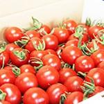 生食用トマト