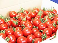 namasyokuyou-tomato